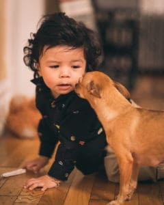 Adopting a dog with a baby