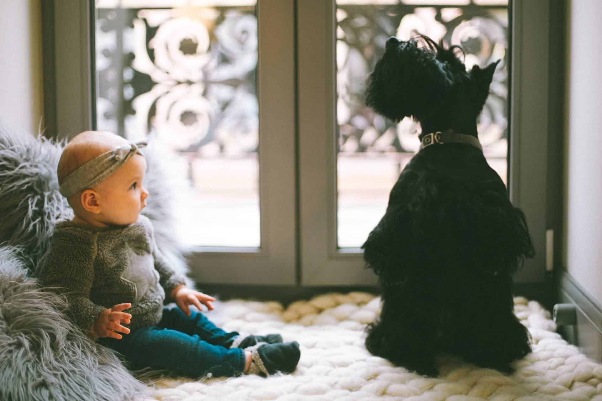 Dogs and Babies: How to Prepare Before Bringing Home a New Pooch