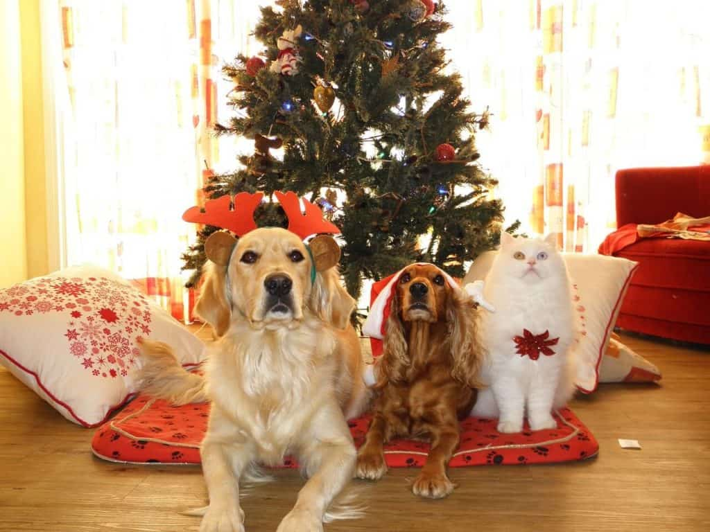 Let's get a pet for Christmas