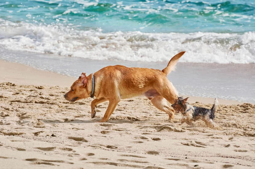 Dogs in the beach