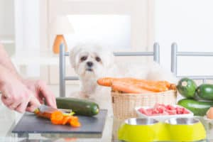 Dog looking at vegetables