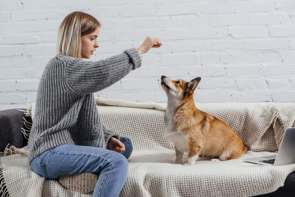 5 most interesting pet industry trends in 2021