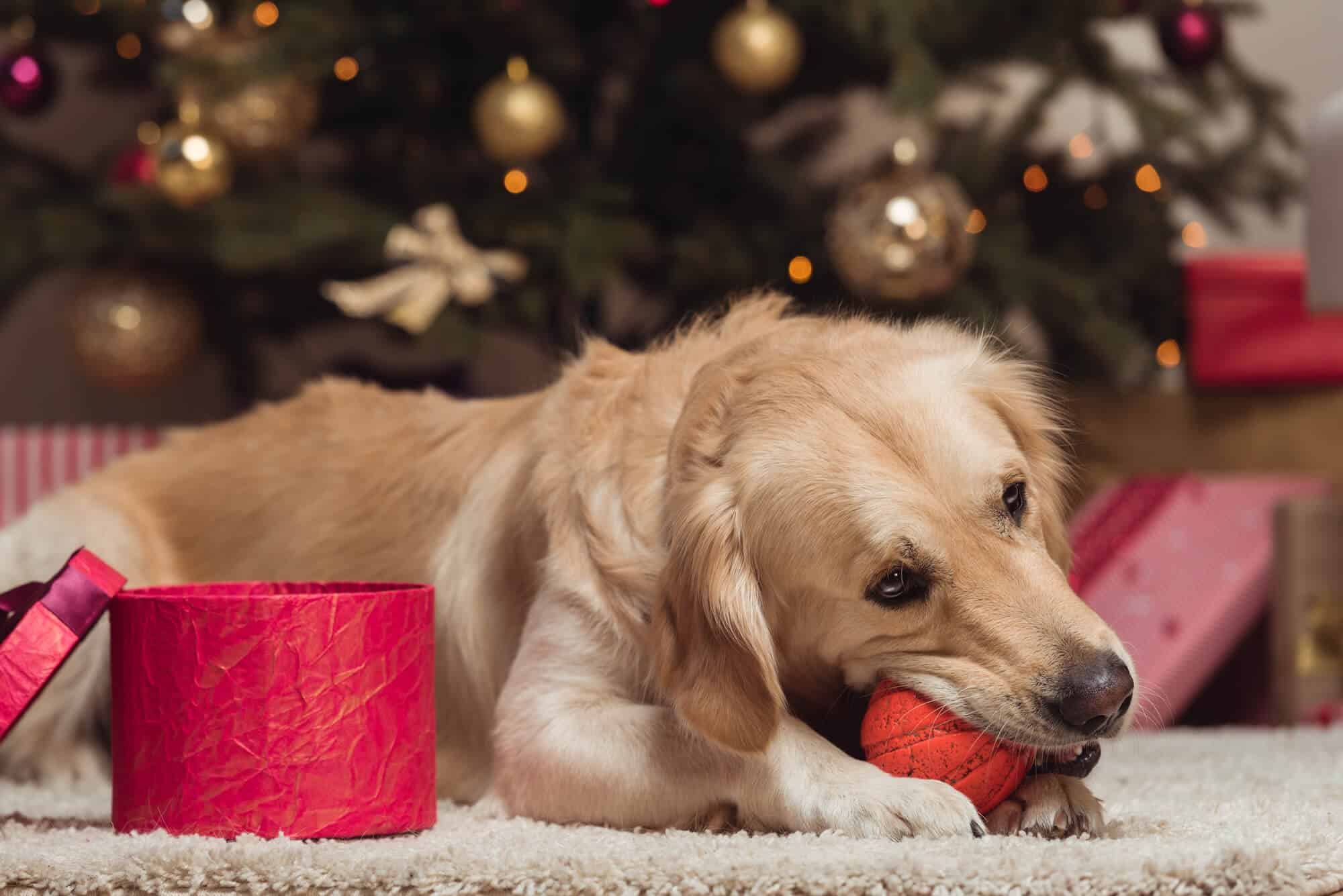 7 Best Gifts for Dog lovers 2021